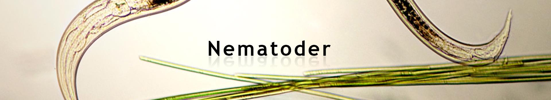 Kategoribillede_Nematoder_SE